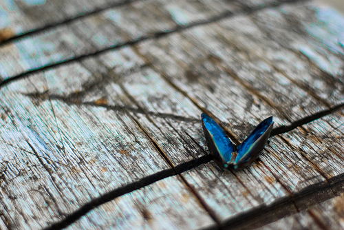 """Blue on Wood"" by Kjartan Michalsen via Flickr"