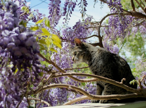 What's more mindful than a cat? by Tamara Magnisky