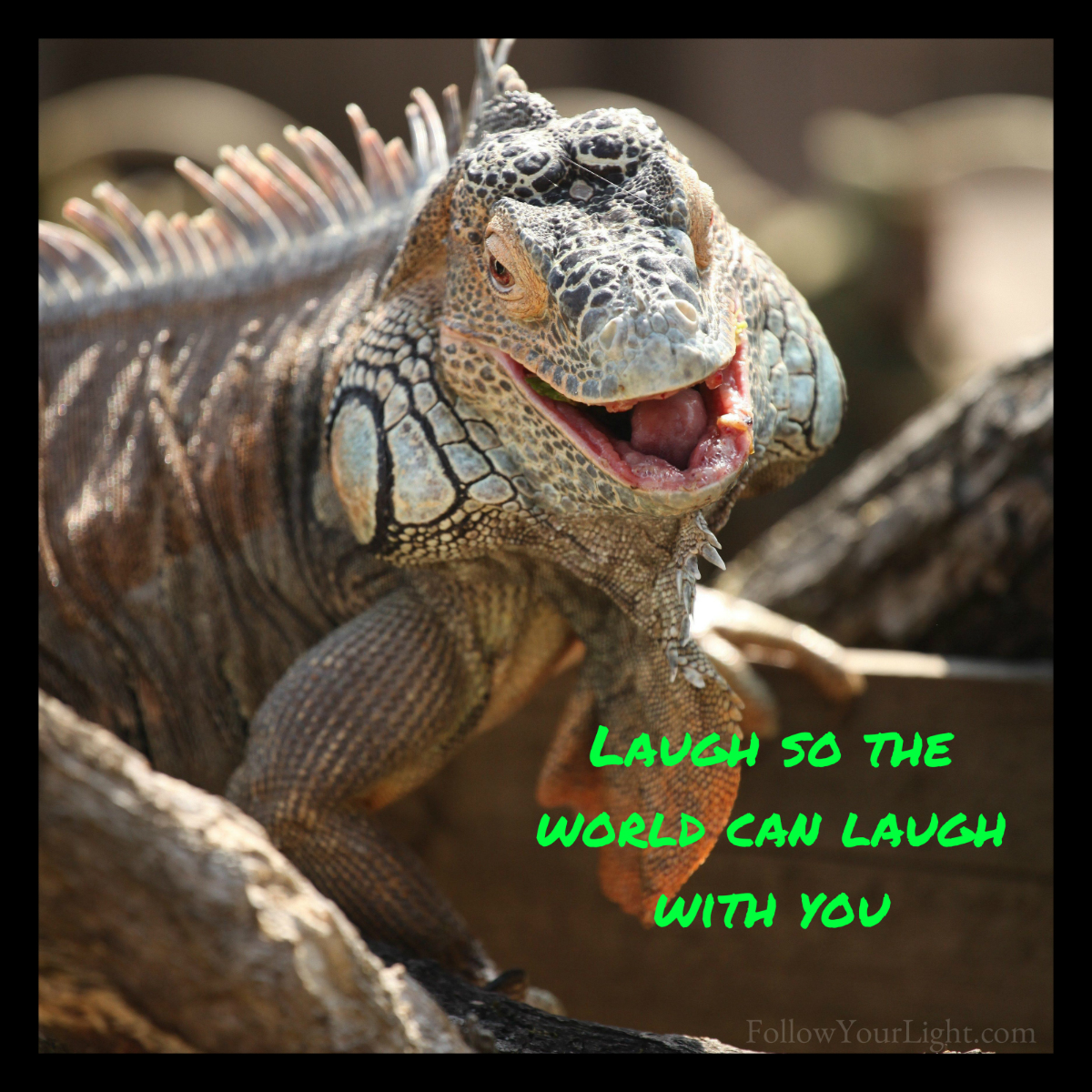 Laugh With The World